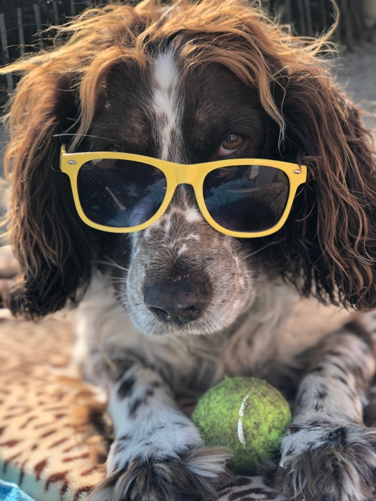 dog-sunglasses2